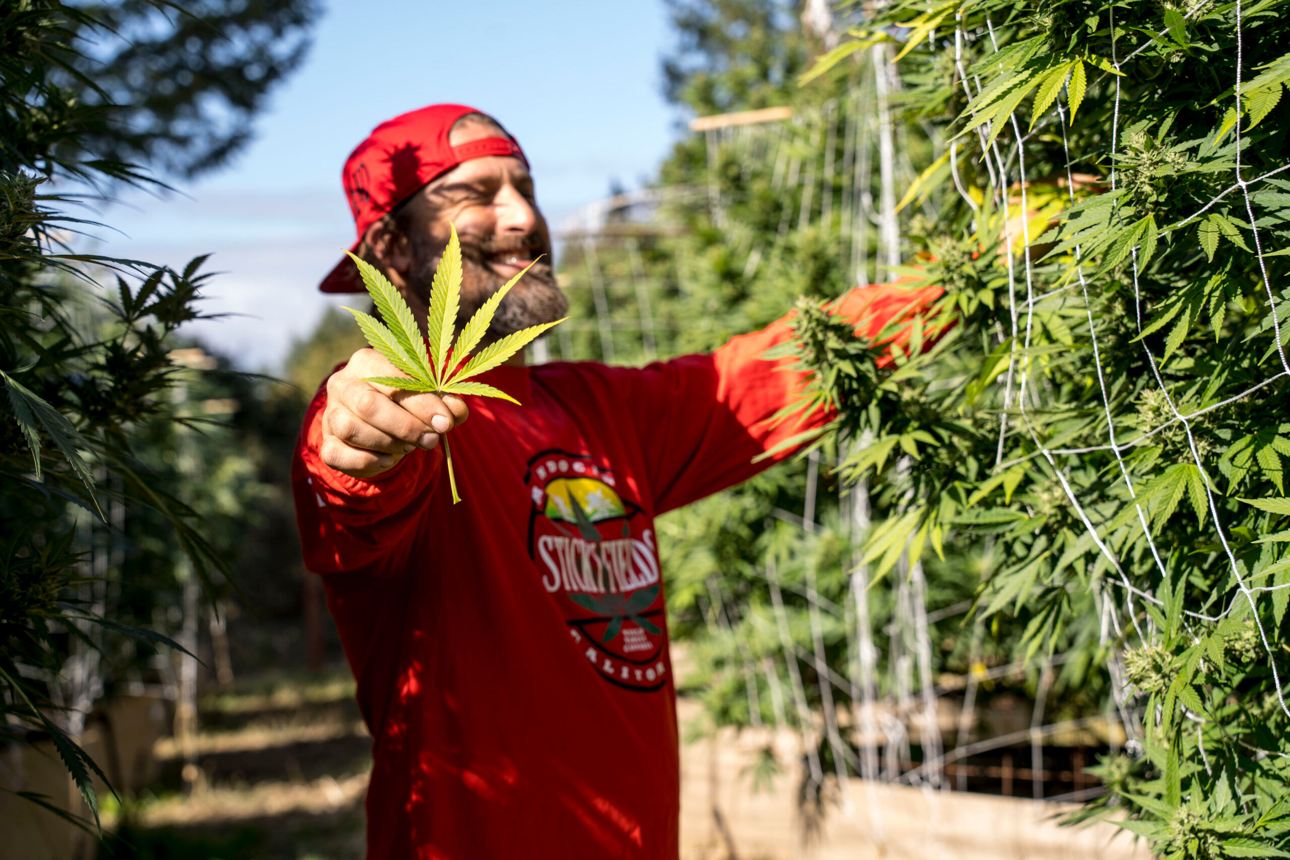 Jesse Robertson is a legacy cultivator in Humboldt County.