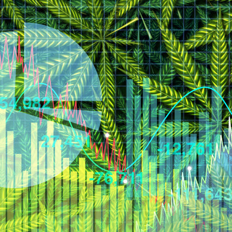 Cannabis as a global commodity?